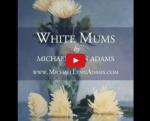 <b>White Mums</b><h5>A Short Video Demo</h5>