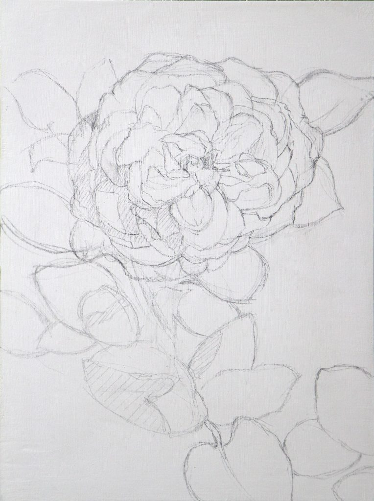 White Rose under drawing